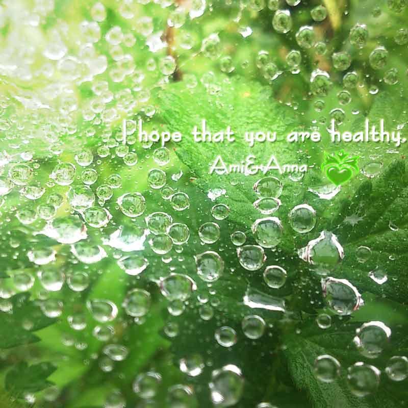蜘蛛の巣に雨の水滴が美しい写真