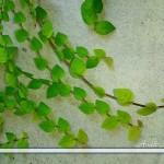 壁に緑の葉