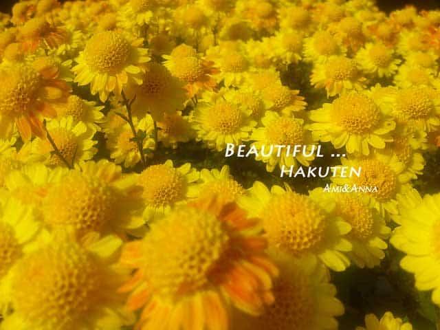 黄色い小菊の花