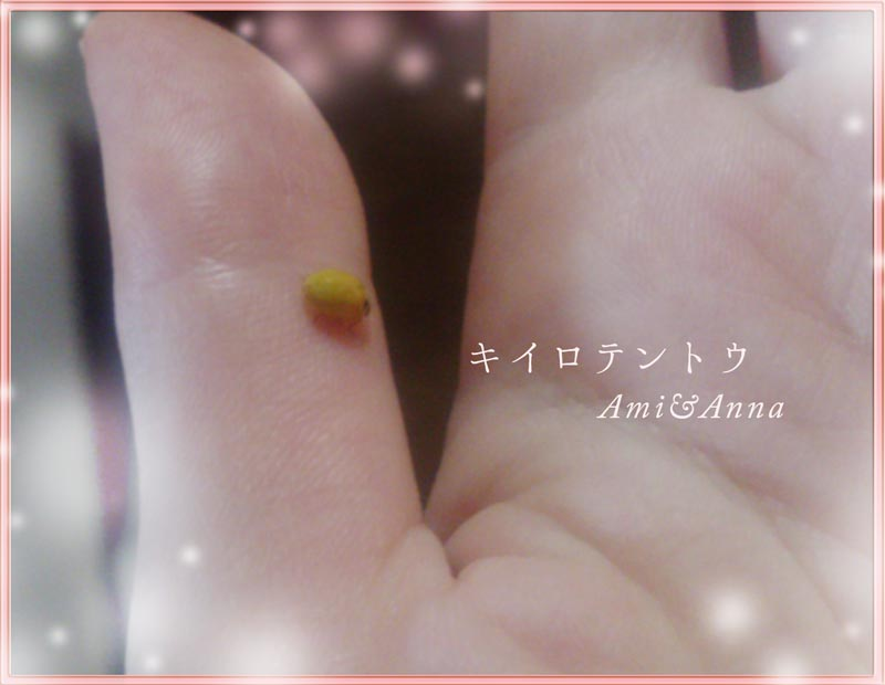 親指にとまった黄色いてんとう虫