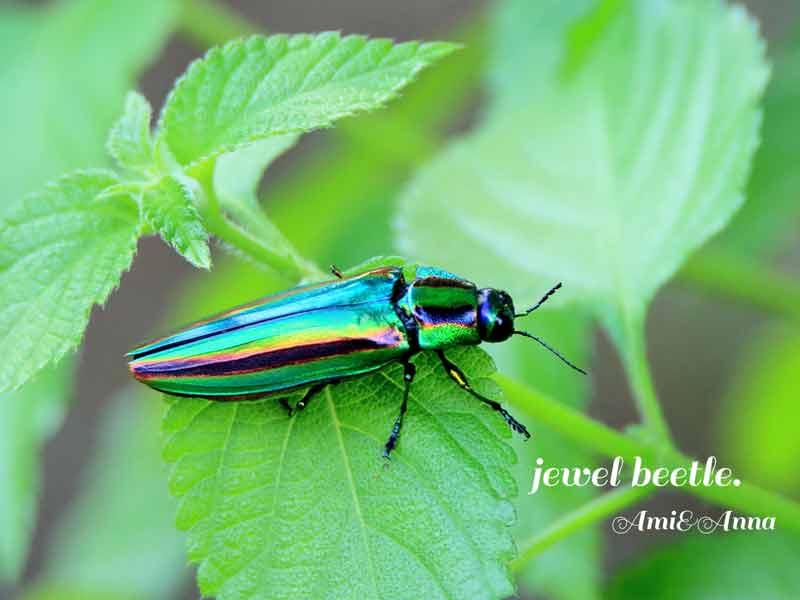緑の葉に乗っている美しい玉虫