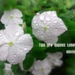 雨上がりの白い花