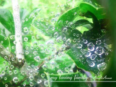 蜘蛛の巣についている雨の水滴