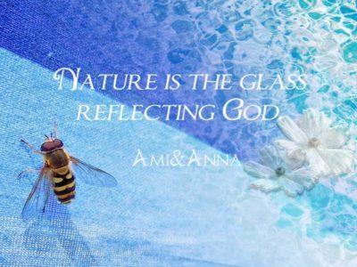 蜂と海と白い花のグラフィック画像