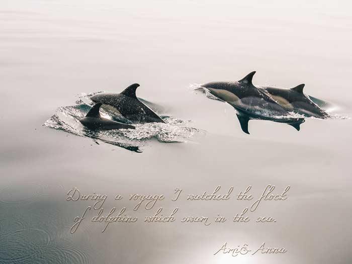 数匹のイルカが優雅に海で泳いでいる