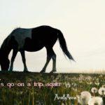 茶色と白のまだら模様の馬とタンポポの合成画像