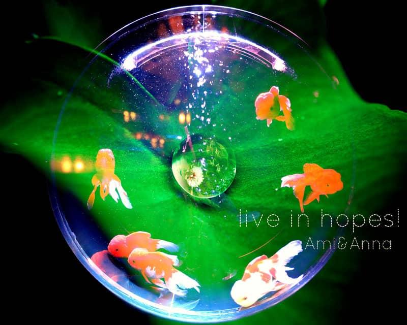 金魚鉢で泳ぐたくさんの金魚