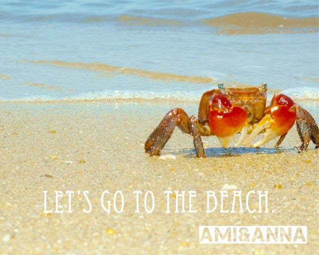 浜辺にいる赤い蟹