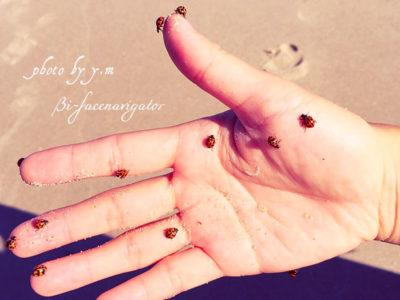 12匹のてんとう虫が手の平に止まっている写真