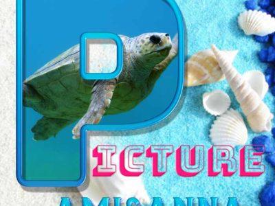 Pictureと書いた亀と貝殻のグラフィック画像