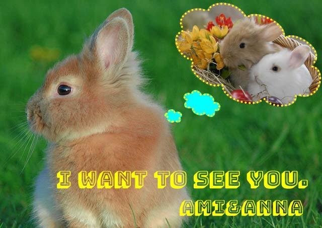 茶色のウサギ