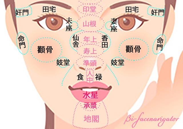 中停の顔の部位一覧