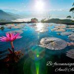 蓮の池と太陽