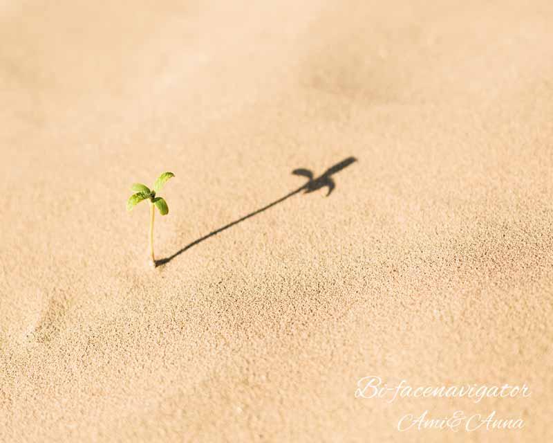 砂に生えている芽
