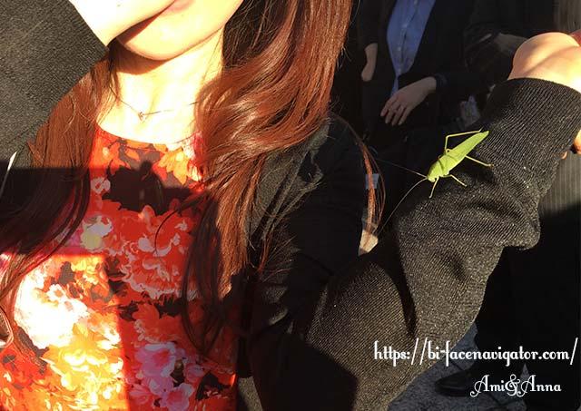 Amiの腕にとまっている緑のバッタ(ツユムシ)