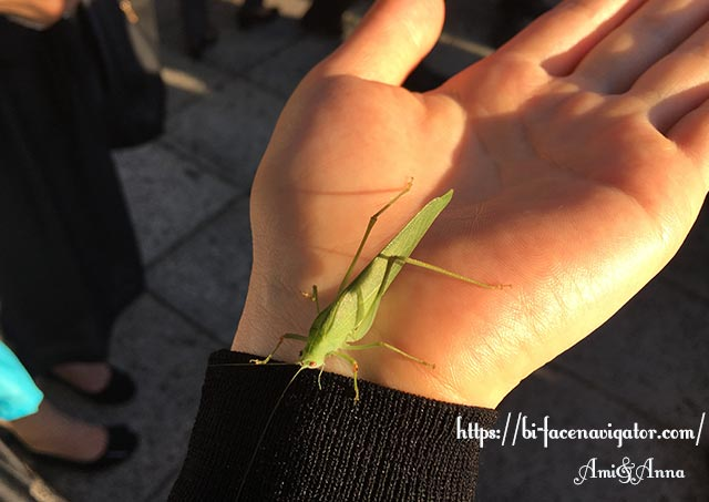 Amiの手の平に乗っている緑のバッタ(ツユムシ)
