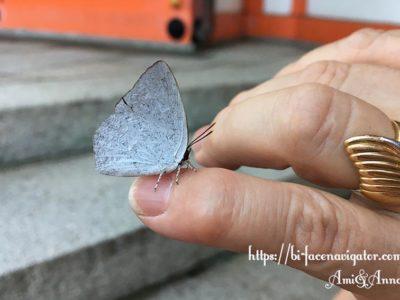 左手小指にとまっている白い蝶々