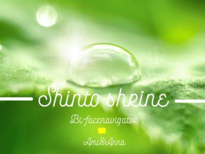 緑の葉に乗っている水滴