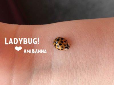 Amiの手首に止まっているてんとう虫