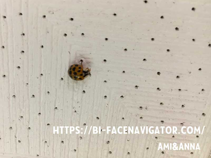 我が家の天井に止まっているてんとう虫