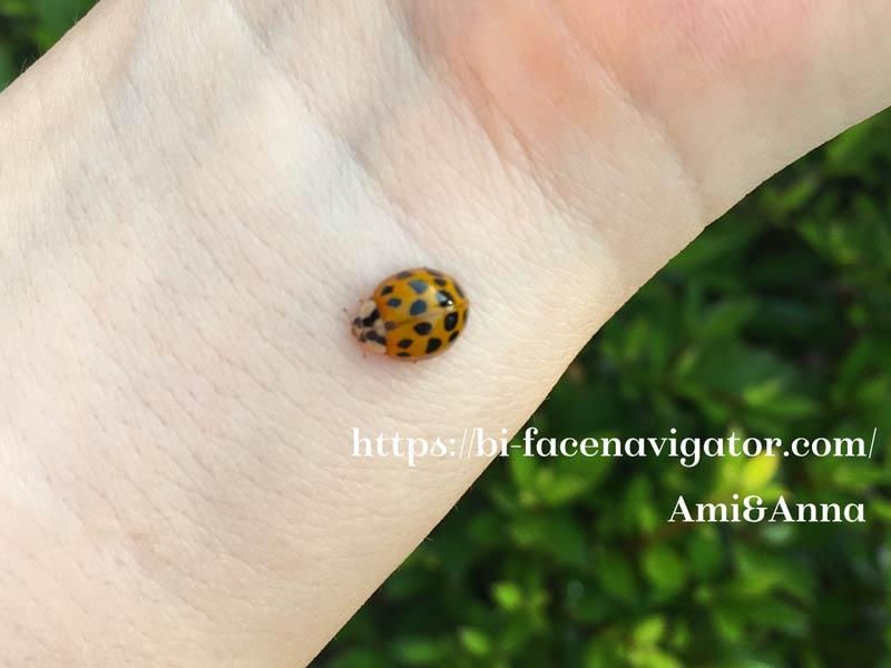Amiの手首で静止しているてんとう虫