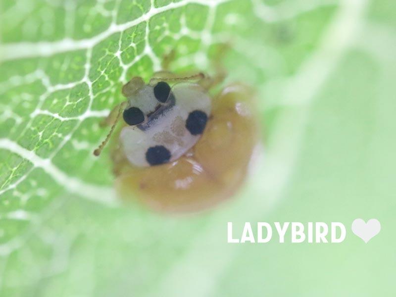 てんとう 虫 の お告げ てんとう虫は幸運のシンボル♪ てんとう虫が教えてくれる幸運とは?