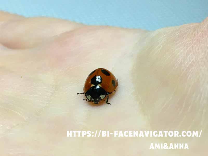 Amiの手の平にとまっているナナホシテントウ虫