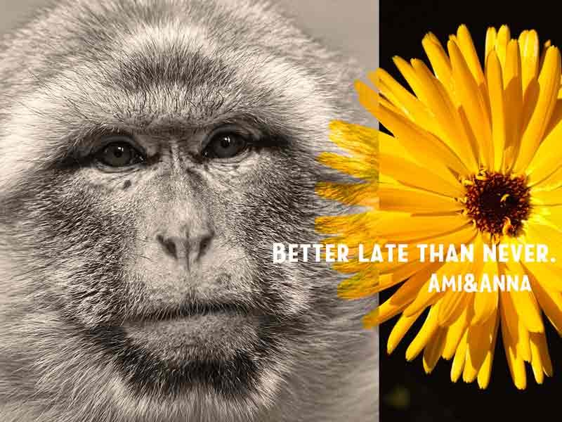 日本猿と黄色い花の合成画像