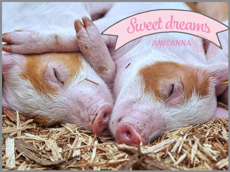 手を繋いで寝ている2匹の白い豚